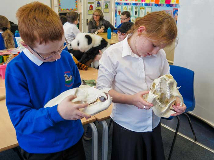 School children examining bear skulls as part of an Education lesson