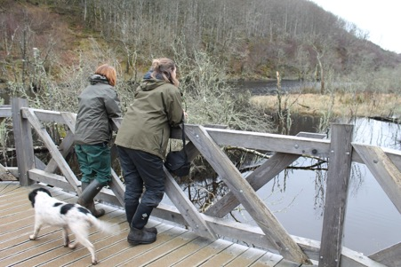 Viewing the beaver influenced habitat at the Dubh loch from the boardwalk. Photo by B. Harrower, Scottish Beavers