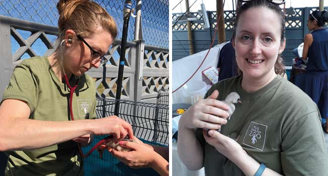 RZSS vet Georgina and Edinburgh Zoo Registrar Harriet helping SANCOBB with the flamingo chicks in Cape Town