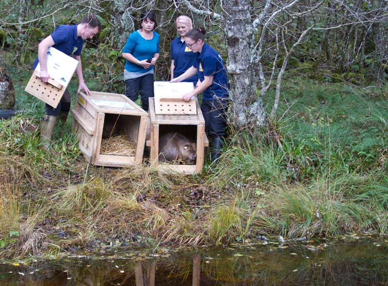 RZSS conservation team working to reintroduce beavers in Knapdale - photo by Steve Gardner